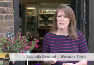 Lucinda Exwood